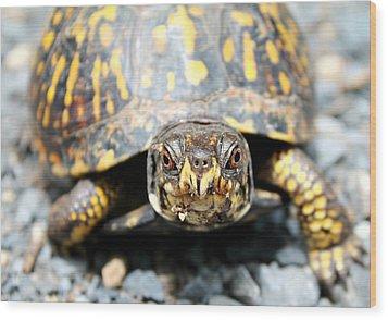 Eastern Box Turtle Wood Print