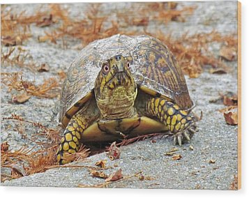 Wood Print featuring the photograph Eastern Box Turtle by Cynthia Guinn