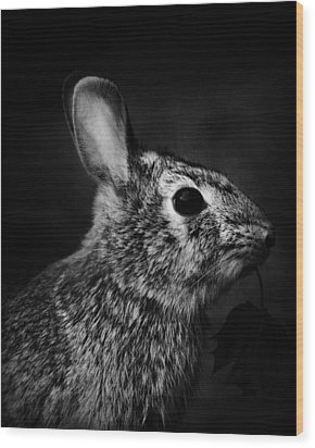 Eastern Cottontail Rabbit Portrait Wood Print by Rebecca Sherman