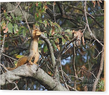 Eastern Fox Squirrel Wood Print by Jack R Brock