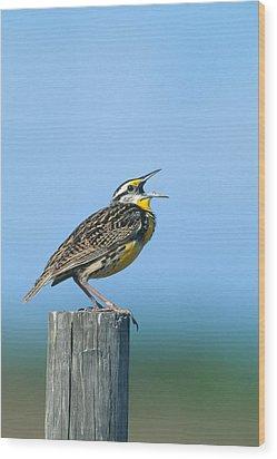 Eastern Meadowlark Wood Print by Paul J. Fusco