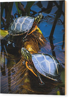 Eastern Painted Turtles Wood Print by Bob Orsillo