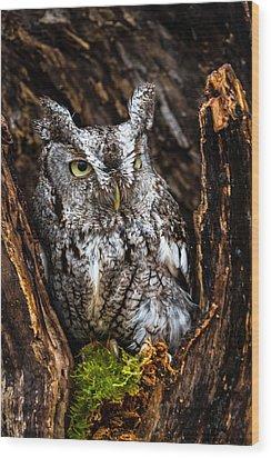 Eastern Screech Owl Wood Print by Craig Brown