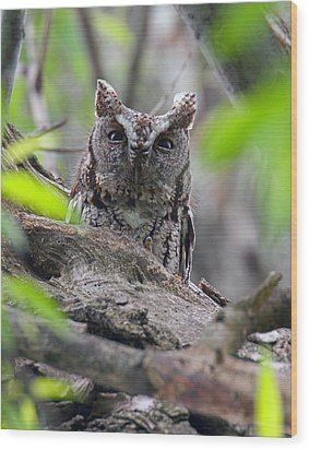 Eastern Screech Owl II Wood Print