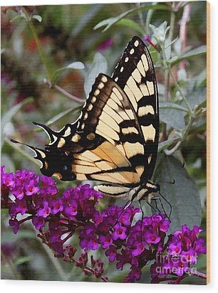 Eastern Tiger Butterfly Wood Print by James C Thomas