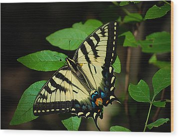 Eastern Tiger Swallowtail Wood Print by Bianca Nadeau