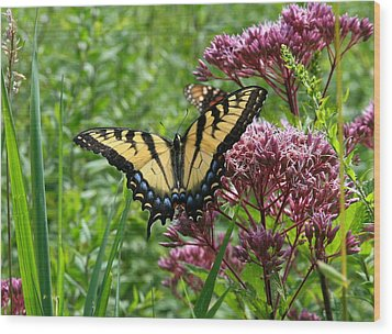 Eastern Tiger Swallowtail On Joe Pye Weed Wood Print