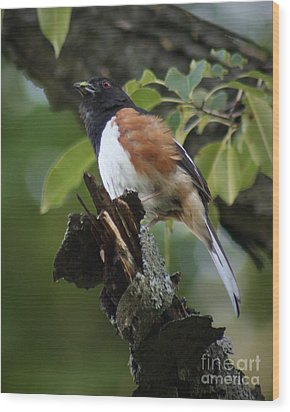 Wood Print featuring the photograph Eastern Towhee by Anita Oakley