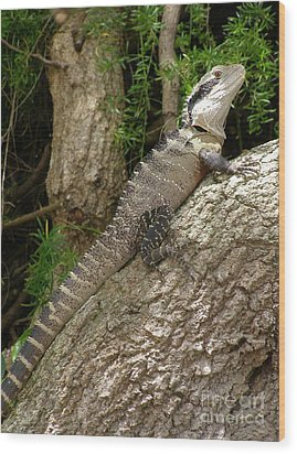 Eastern Water Dragon Wood Print by Bev Conover