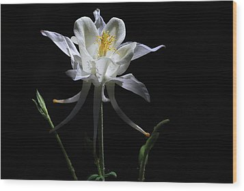 Ebony And Ivory Wood Print by Donna Kennedy