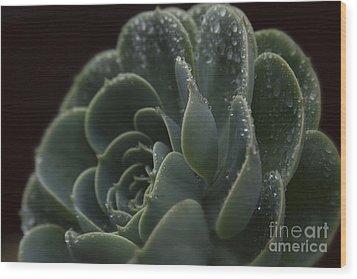 Echeveria Elegans X Lola - Crassulaceae Wood Print by Sharon Mau