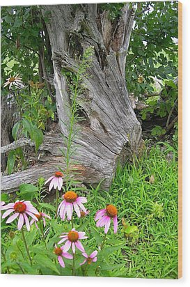 Echinacea Stumpage Wood Print