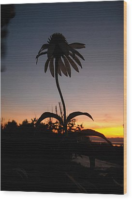 Echinacea Sunset Wood Print