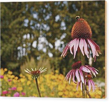 Echinacea With Bee Wood Print by Linda Bianic