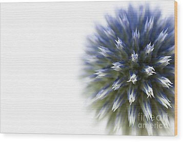 Echinops  Wood Print by Anne Gilbert