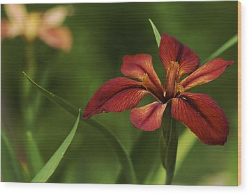 Wood Print featuring the photograph Echo - Copper Iris Art Print by Jane Eleanor Nicholas
