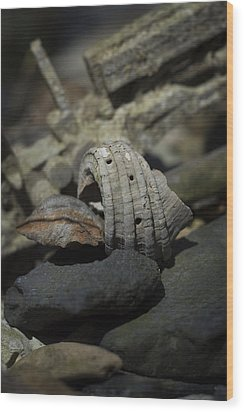 Wood Print featuring the photograph Ecphora Gardnerae by Rebecca Sherman