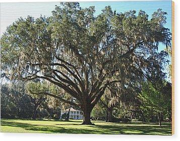 Eden Gardens State Park 1 Wood Print