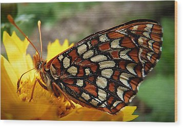 Wood Print featuring the photograph Edith Checkerspot by Julia Hassett