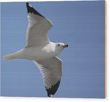 Wood Print featuring the photograph Effortless Flight by Bill Woodstock