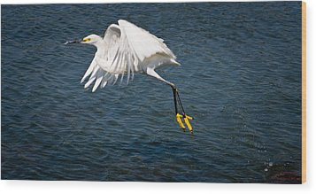 Wood Print featuring the photograph Egret Aloft by Janis Knight