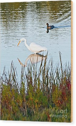 Wood Print featuring the photograph Egret And Coot In Autumn by Kate Brown