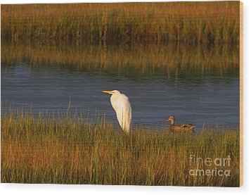 Egret And Duck Wood Print by David Bishop