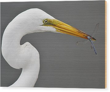 Egret And The Dragonfly Wood Print by Paulette Thomas