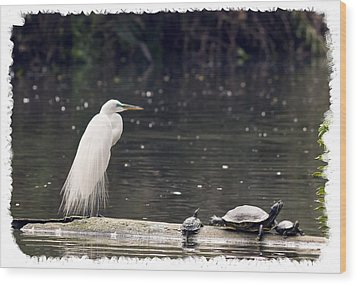 Egret And Turtles Wood Print