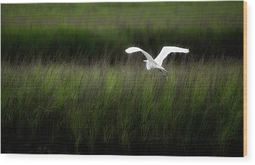 Wood Print featuring the photograph Egret At Pawleys Island by Frank Bright
