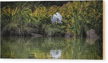 Wood Print featuring the photograph Egret At The Lake by Chris Lord