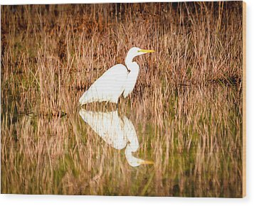 Egret Basking In The Morning Sun Wood Print