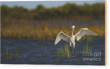 Egret Dancer Wood Print