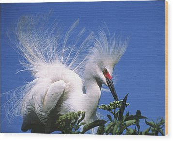 Egret Finery Wood Print by Elvira Butler
