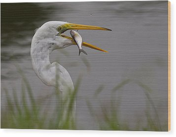 Wood Print featuring the photograph Egret Having Lunch by Jerry Gammon