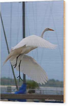 Egret In Flight Wood Print by Debra Forand