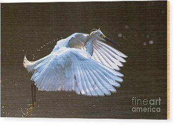 Egret In Flight II Wood Print