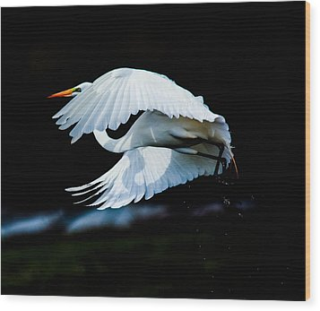 Wood Print featuring the photograph Egret In Flight by Kelly Marquardt
