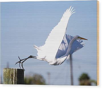 Wood Print featuring the photograph Egret In Flight by Linda Cox