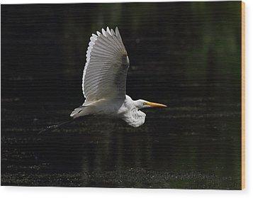 Egret In Flight Wood Print by Mike Farslow