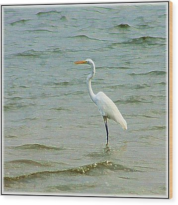 Egret In The Shallows Wood Print