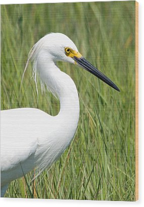 Wood Print featuring the photograph Egret In The Sound by Greg Graham