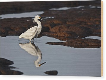 Wood Print featuring the photograph Egret In Tide Pool  Mg_9631 by David Orias