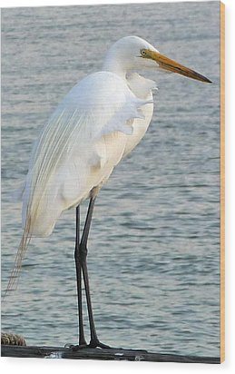 Wood Print featuring the photograph Egret by John Collins