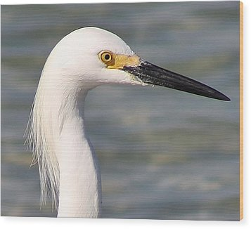 Egret Portrait Wood Print by Bruce Bley
