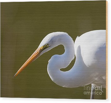 Egret Portrait Wood Print