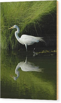 Egret Reflections Wood Print by Lara Ellis