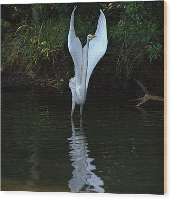 Wood Print featuring the photograph Egret Take Off by Charlotte Schafer
