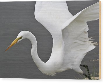 Egret Take Off Wood Print by Paulette Thomas