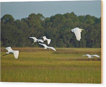 Egrets In Flight On Jekyll Island Wood Print